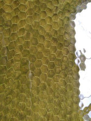 Honeycomb - old gold 125x38x10 mm.